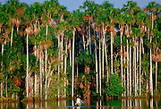 Man in a rowing boat on Lake Sandoval, Peruvian Rainforest, South America