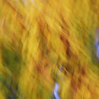 """""""Swirling Autumn <br /> <br /> Flowing and swirling golden yellow abstract!"""