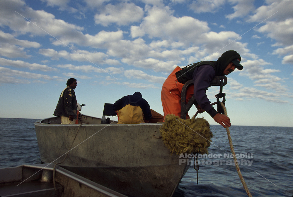 USA, Newport RI - Trap fishing crew from the Aquidneck lobster company picks up the line to haul the trap net.