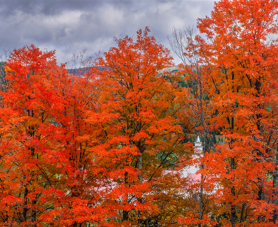 Sugar maple trees in brilliant orange fall color and glimpse of country church, East Topsham, VT