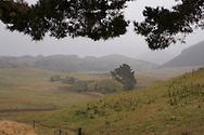 Waipapa 9 Trust, a finalist in the 2010 Ahuwhenua Trophy - BNZ Maori Excellence in Farming Awards. New Zealand, 2010.<br /> <br /> Photo by: ALPHAPIX<br /> <br /> www.alphapix.co.nz<br /> info@alphapix.co.nz<br /> phone: 0272 533464