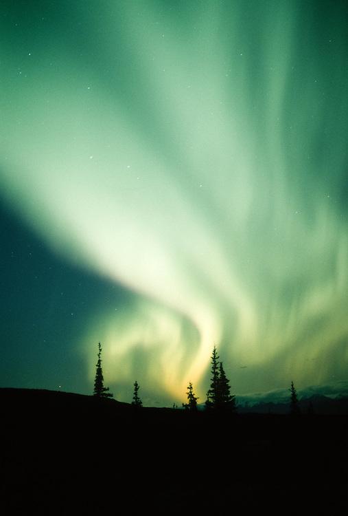 Alaska. Denali NP. Aurora Borealis.