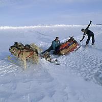 "INTERNATIONAL ARCTIC PROJECT.  Martin Hignell & Takano Takako (MR) react as their sled & dogs break thru hidden Arctic Ocean ""lead."""