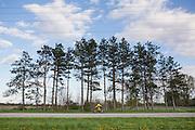 Kathleen bikes on country roads in Brooklyn, Wisconsin on May 4, 2016. <br /> <br /> Beth Skogen Photography - www.bethskogen.com