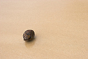 Lone coconut washed up on a beach on Waya Island. Waya is part of the Yasawa Islands, on the western side of Fiji.