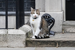 Downing Street, London, October 25th 2016. Larry the Downing Street cat sits outside10 Downing Street as the cabinet meeting takes place with the announcement that the construction of a third runway at Heathrow Airport has initial government approval.