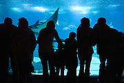 People watch the main tank at the oceanario, where many species of fish and other ocean creatures live, recreating an open sea environment.