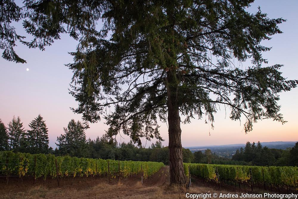 Rain Dance Vineayrds, Chehalem Mountains AVA, Willamette Valley, Oregon