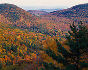 Autumn colors of birch, maple and white pine forest viewed from Poke-O-Moonshine Mountain, Adirondack Park, New York.