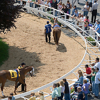 (PPAGE1) Oceanport 5/14/2005 Horses getting ready in the paddock of Monmouth Park on opening day.    Michael J. Treola Staff Photographer....MJT