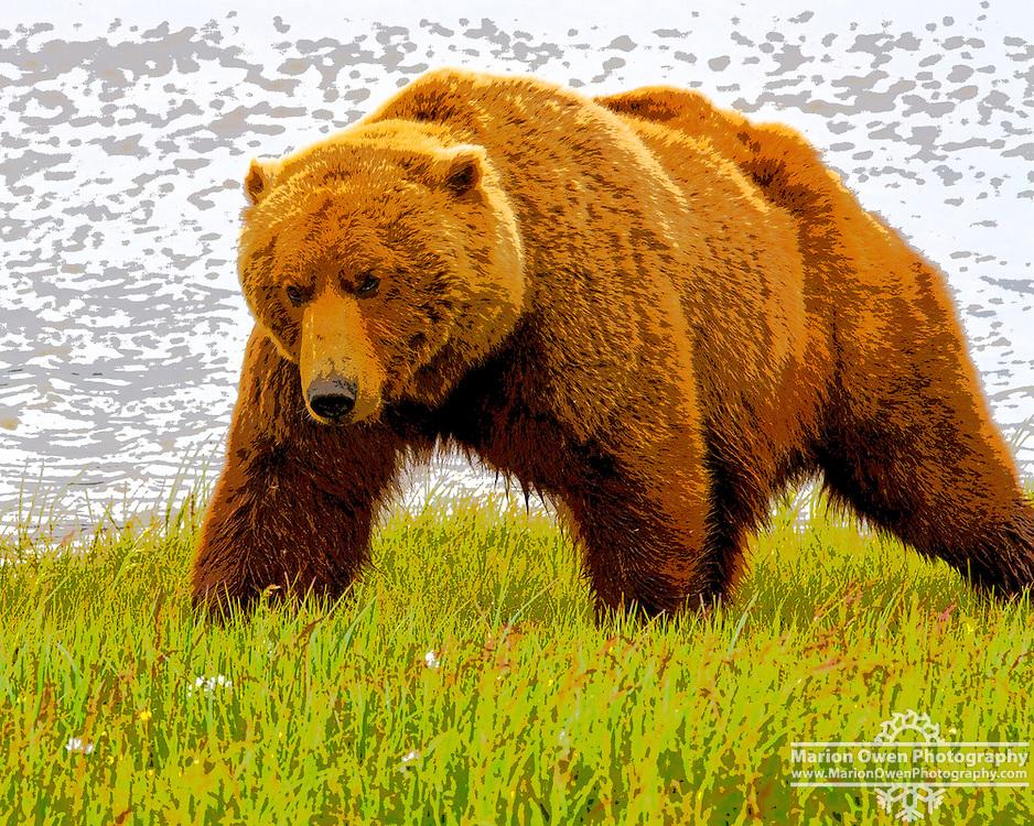 Coastal brown bear Hallo Bay, Katmai National Park, Southwest Alaska, summer