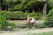 senior volurnteer gardener working inside the Kyoto Imperial Palace Park gardens