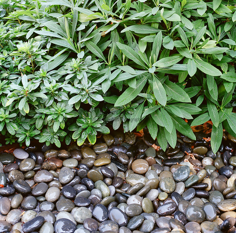 juxtaposing materials in a garden can add drama and eliminate grass lawns while creating a beautiful texture and pattern in the landscape