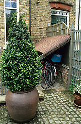 Large box topiary in container in front of bike storage area.