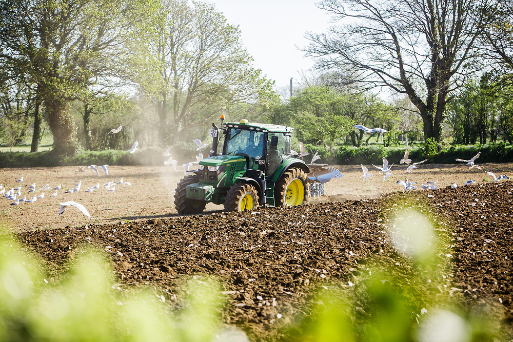 Tractor ploughing agricultural land ready for planting crops of Jersey Royal new potatoes in the countryside of Jersey, Channel Islands