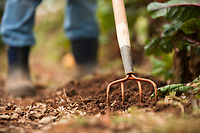 Gardening tool and work boots in organic garden.