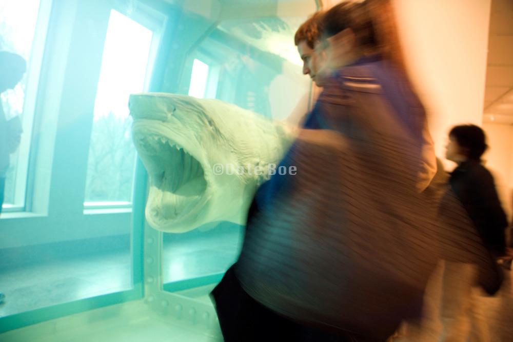 people gazing at Damien Hirst shark  art piece on display in the Metropolitan Museum of Art NYC 2008