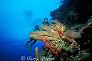 Bloody Bay Wall,<br /> Little Cayman Island ( Caribbean Sea )   <br /> MR 169   MR 170