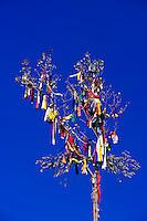 Tree of life (prayer pole), Site of American Indian Sundance (on the Summer Solstice), Black Hills Wild Horse Sanctuary, near Hot Springs, Black Hills, South Dakota USA