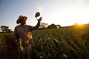 Fronteira_MG, Brazil.<br /> <br /> Claudemir do Amaral Garcia, dono de um sitio as margens da BR 153 onde se planta abacaxi em Fronteira, Minas Gerais.<br /> <br /> Claudemir Amaral Garcia, the owner of a farm along the highway BR 153 where He cultivates pineapple in Fronteira, Minas Gerais.<br /> <br /> Foto: LEO DRUMOND / NITRO