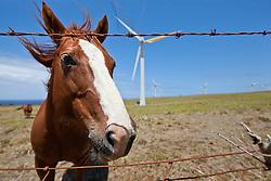 Horse at North Kohala Wind Farm, Big Island, Hawaii