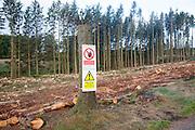 Tree felling forestry operations in Dartmoor national park, Bellever forest, Postbridge, Devon, England