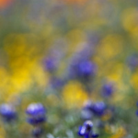 Impressionistic feel of this image shot in antelope valley, california.