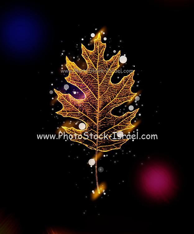 Digitally enhanced neon effect image of a single Oak leaf on black background