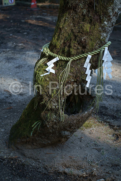 Shimenawa and Shime tied to a tree in the grounds of a temple. Nikko, Japan. Sacred places are typically marked with a shimenawa (special plaited rope) and shime (strips of white paper). Placed at the entrances of holy places to ward off evil spirits, or placed around trees/objects to indicate presence of kami. Made of rice straw or hemp, the rope is called nawa 縄. The pieces of white paper that are cut into strips and hung from these ropes (often hung from ropes on Torii gates as well) are called shime 注連 or gohei; they symbolize purity in the Shintō faith.