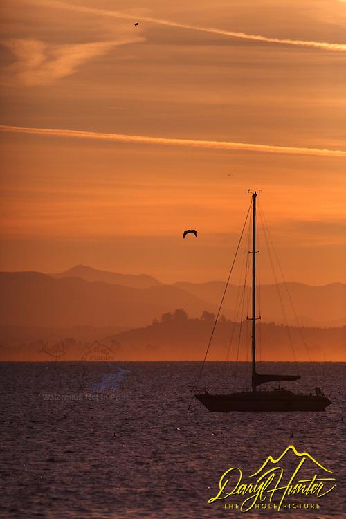 Sailboat, Sunrise, sea bird, mountains, Port San Luis, Avila Beach, California