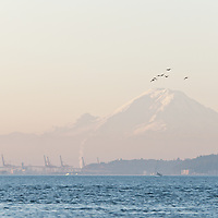 Dawn on Puget Sound, with the West Seattle Bridge and Mount Rainier.  Photo by William Byrne Drumm.