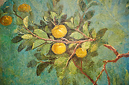 Painted Fruit Tress in the Roman fresco of a garden from Villa Livia (Early first century AD), Rome, Livia was the wife of Roman emperor Augustus.  Museo Nazionale Romano ( National Roman Museum), Rome, Italy.<br /> Trees and shrubs had symbolic importance to the Romans as can be see by the plants used in the trompe-l'œil frescoes from the Villa Livia, Rome, which contains plants linked to the deities particularily venerated by Augustus and Livia. .<br /> <br /> If you prefer to buy from our ALAMY PHOTO LIBRARY  Collection visit : https://www.alamy.com/portfolio/paul-williams-funkystock/national-roman-museum-rome-fresco.html<br /> <br /> Visit our ROMAN ART & HISTORIC SITES PHOTO COLLECTIONS for more photos to download or buy as wall art prints https://funkystock.photoshelter.com/gallery-collection/The-Romans-Art-Artefacts-Antiquities-Historic-Sites-Pictures-Images/C0000r2uLJJo9_s0