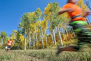 Competitors race in the annual Golden Leaf Half Marathon in Aspen, Colorado.