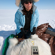 Karyn Rode, USGS assistant biologist, using a (BIA) Bio Electical Impedance Analysis device, to check the weight of a small, female, polar bear. Beaufort Sea ice pack.