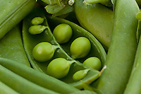 I've done a lot of work in my garden this year and I'm very proud of my vegetables!  I had to get some nice close-ups of these peas before we ate them all!..©2009, Sean Phillips.http://www.Sean-Phillips.com