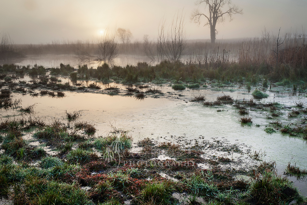 It is still and quiet on this foggy morning. As the sun begins its hazy climb, I scan the pond for any beavers, but I do not see them. What a lovely wetland the beavers have created along the small creek! It has become a home for frogs & toads, turtles, wetland birds and muskrat.