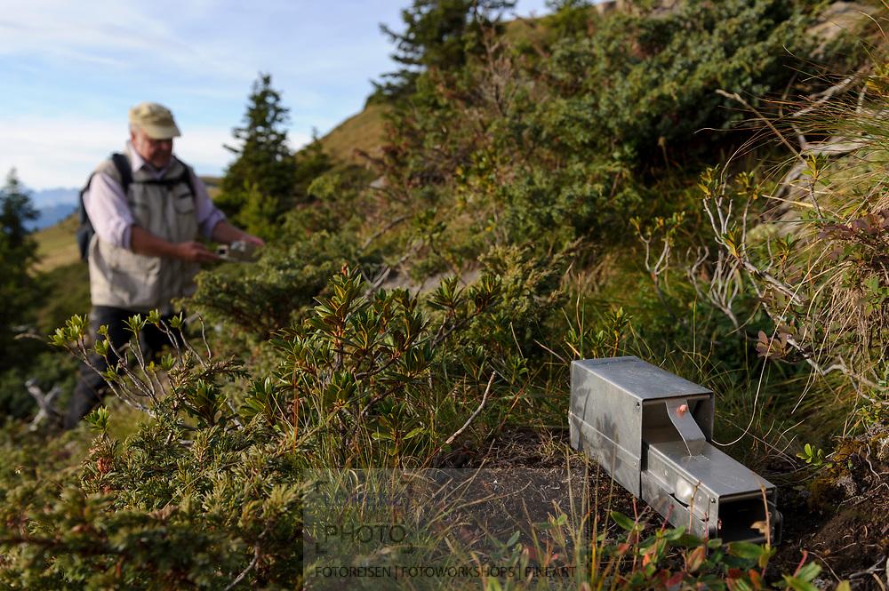Szenen aus der Reportage über Schneemäuse, v.a. Fallenstellen, in der Nähe des Jochs oberhalb Churwalden bei einem idealen Lebensraum. Jürg-Paul Müller, der ehemalige Direktor des Bündner Naturmuseums beim Setzen der Mäusefallen.