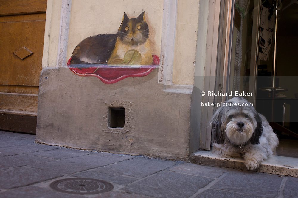 Pet dog and cat drawing in the northern Italian south Tyrolean city of Bozen-Bolzano.