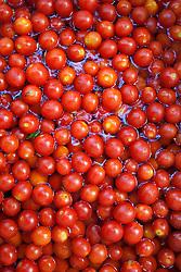 Pomodori da sugo, a bagno in acqua in attesa di essere lavorati. Ancora oggi la preparazione delle conserve di salsa è una tradizione osservata da moltissime famiglie salentine.