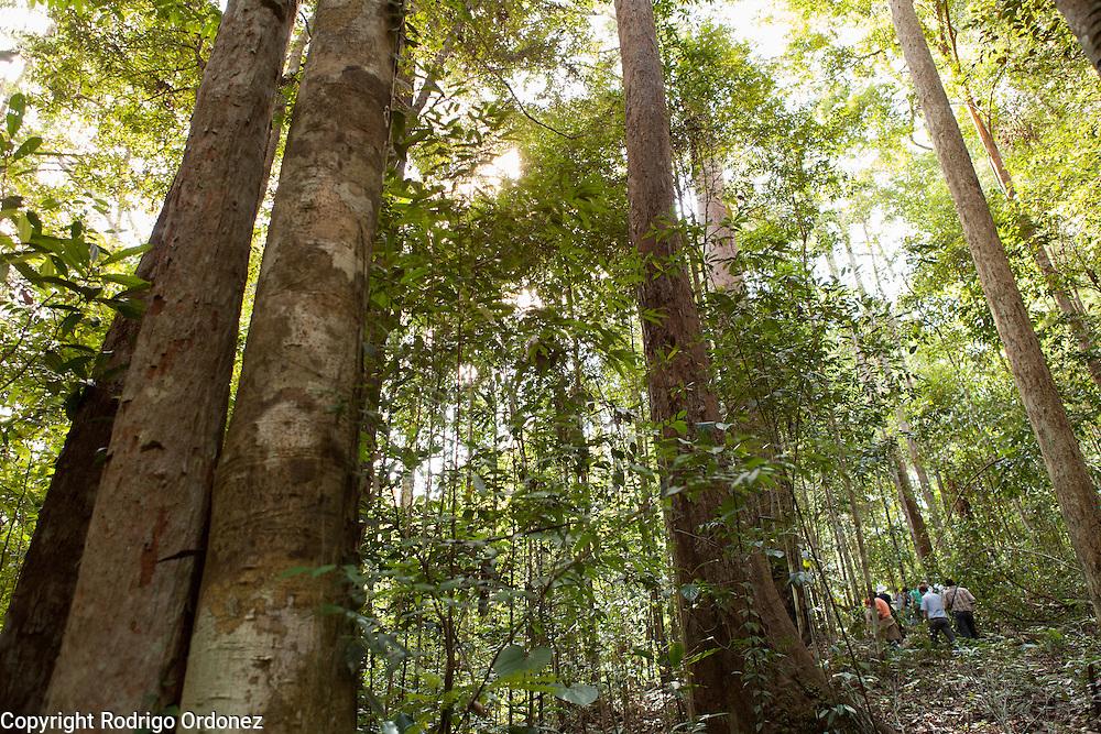 Visitors walk at the Arsari Lestari conservation forest in Penajam Paser Utara district, East Kalimantan, Indonesia, on March 12, 2016. <br /> (Photo: Rodrigo Ordonez)