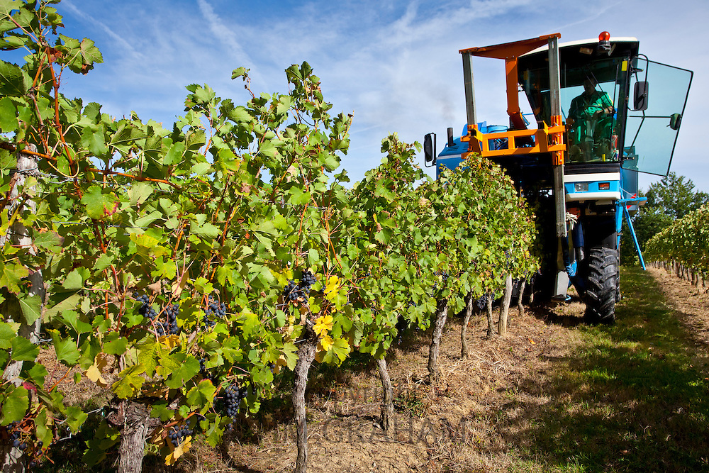 Wine harvest, the vendange, of Merlot grapes by vine tractor at Chateau Fontcaille Bellevue, in Bordeaux region of France