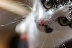 THEMENBILD - eine schwarz weiße Katze, aufgenommen am 15. Juni 2017, Kaprun, Österreich // a black white cat on 2017/06/15, Kaprun, Austria. EXPA Pictures © 2017, PhotoCredit: EXPA/ Stefanie Oberhauser