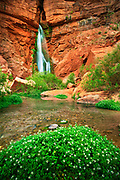 Waterfall on Deer Creek, a side stream to the Colorado River in the interior of the Grand Canyon
