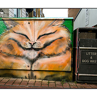 Brighton Graffiti & Street shots;<br /> 28th January 2017.<br /> <br /> © Pete Jones<br /> pete@pjproductions.co.uk