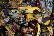 A detail of organic vegetable and fruit matter decomposing inside a home garden composting bin. We look down on to the natural waste as a close-up of the vegetables and fruit scraps that have been thrown away by a city householder in south London. Local authorities encourage the use of compost bins in back gardens (yards) and the proliferation of these efficient containers mean that their residue can be returned to the soil without the expense of transport to landfill. The rotting matter of banana skins, onions and potato peelings will eventually become a nutritious feed for new plants - and so the cycle goes on.
