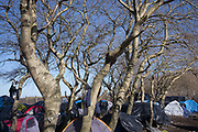 Calais, France, 27 Februari 2015,  Hundreds of tents find shelter under small trees around the jungle of Tioxide.