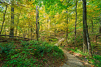It wasn't even October yet, but the leaves were already beginning to change to yellow at Wildcat Den State Park in Iowa. Most of the trees there were still green but I found a lot of color in this section of trail that goes down into the canyon.