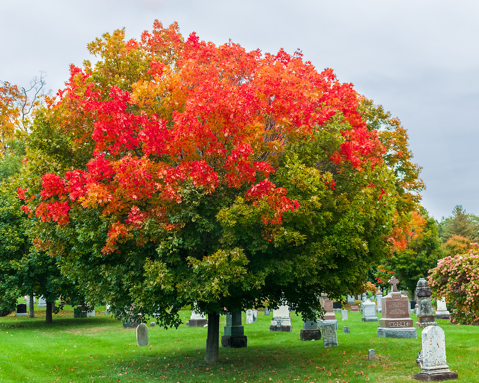 https://Duncan.co/fall-color-at-the-cemetery
