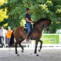 Dressage Horses in Training - Saturday