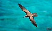 Indian Ocean Wildlife